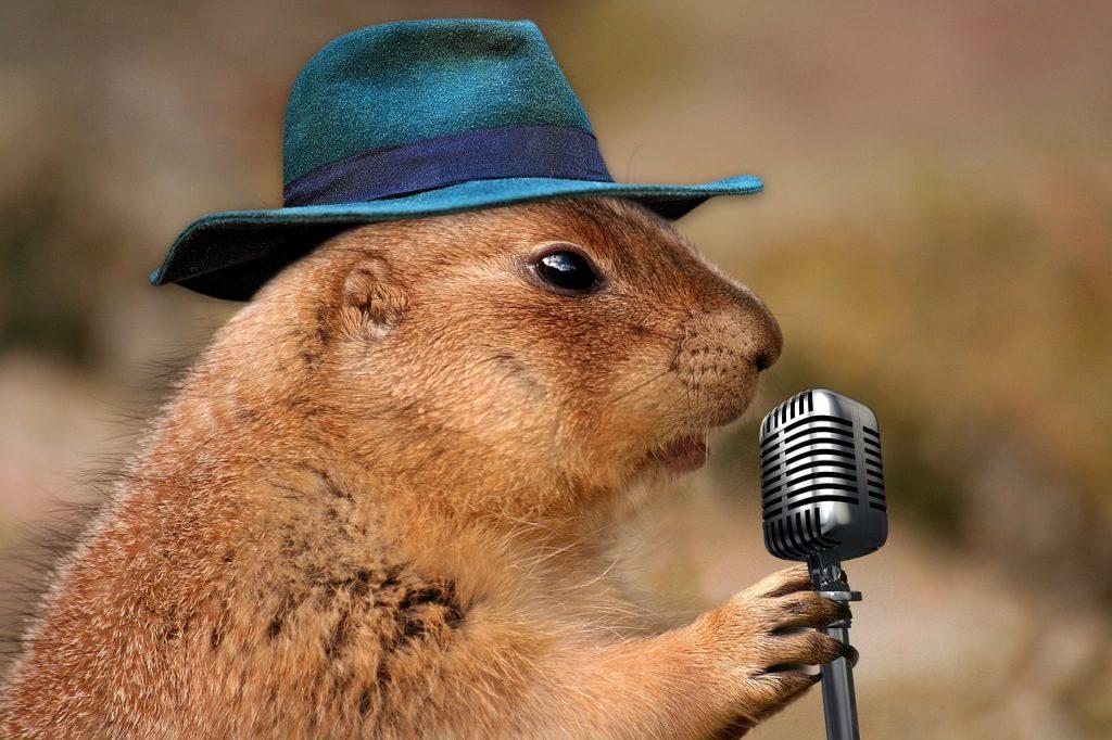 prairie dog singing
