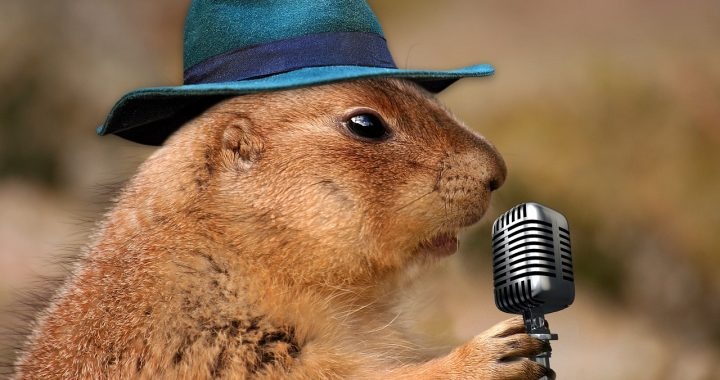prairie dog singing